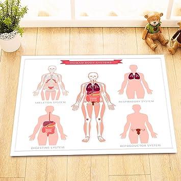 Hand gezeichnete fünf Körper System/menschliche Gesundheit,Bild ...