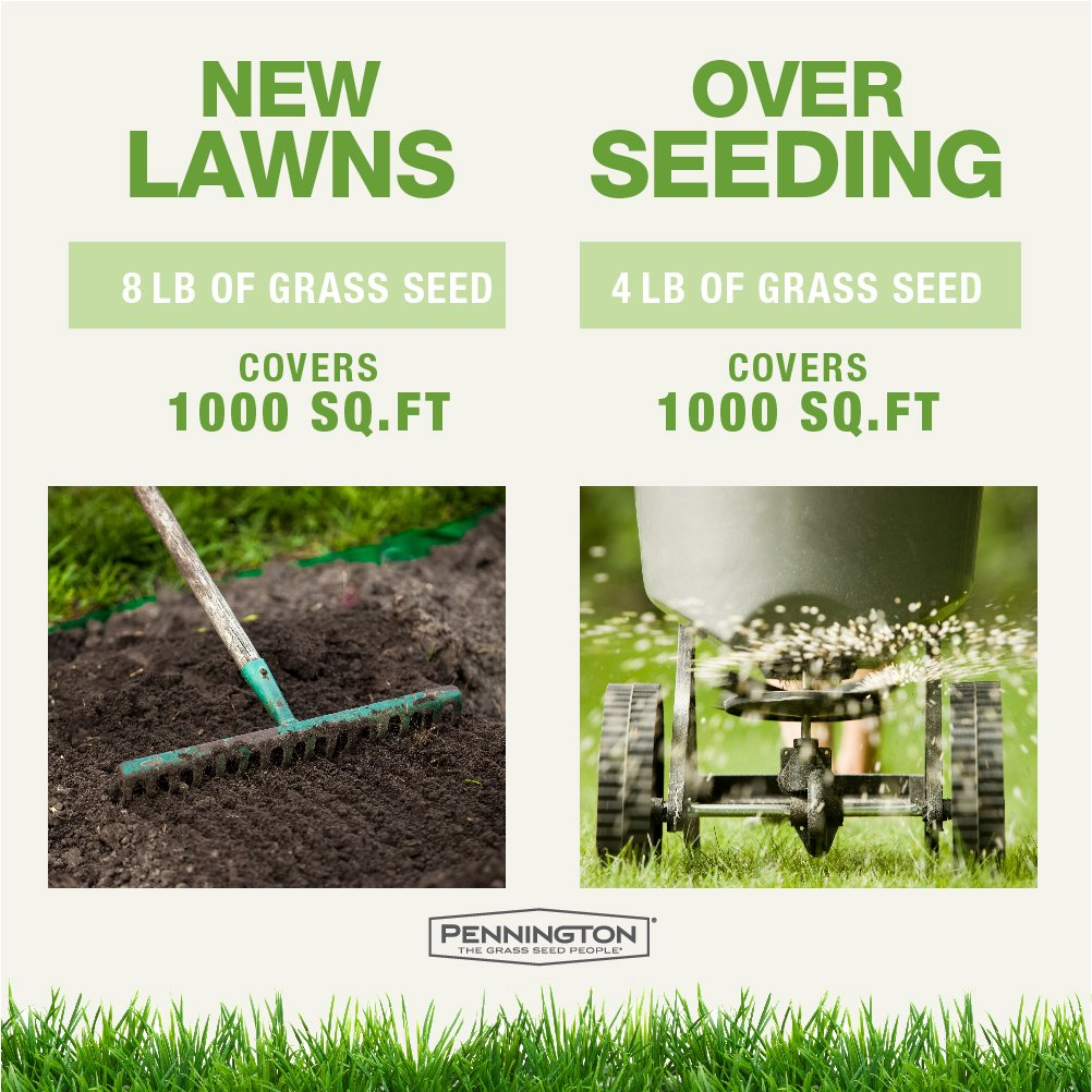 Pennington Kentucky 31 Tall Fescue Grass Seed - 25 lb