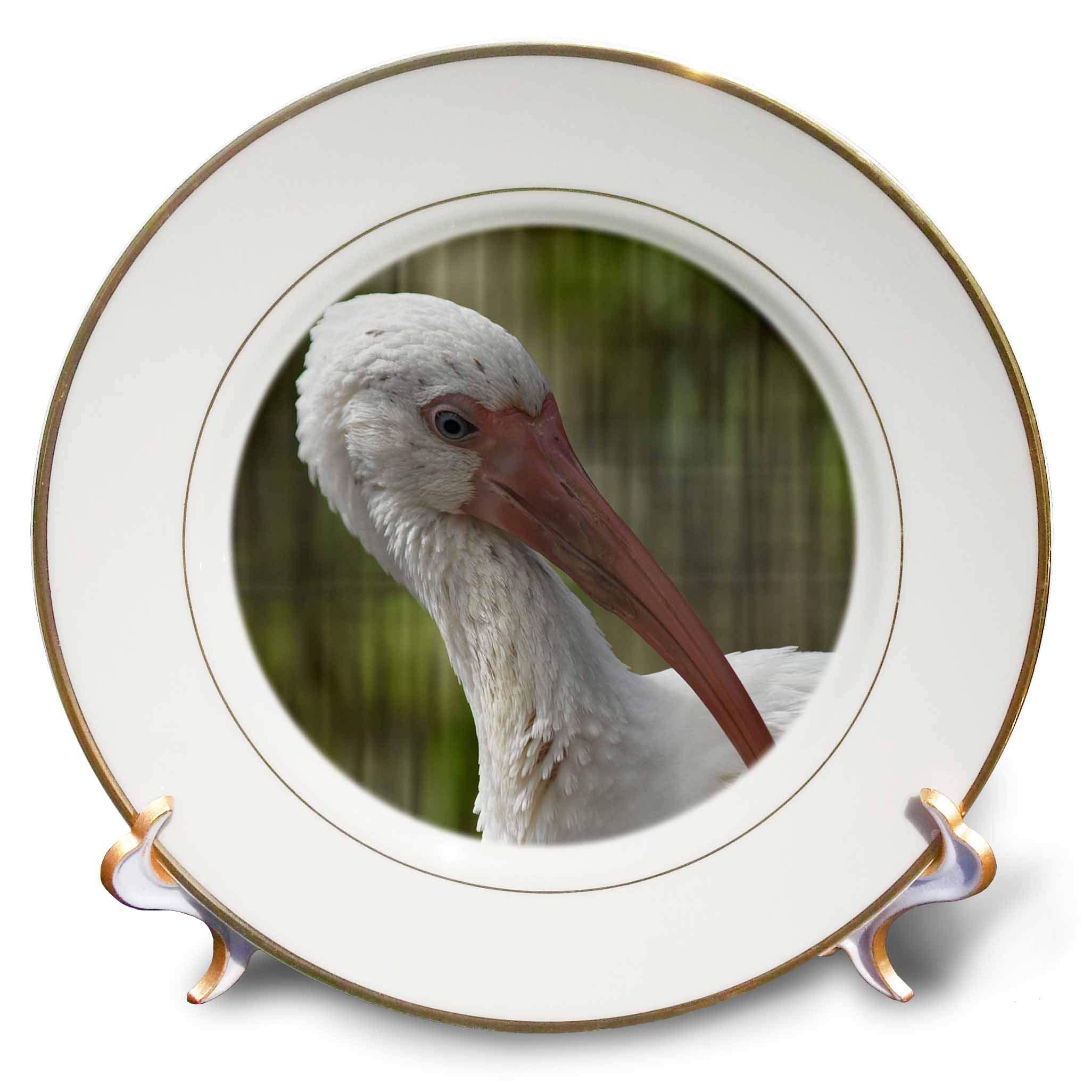 3dRose Susans Zoo Crew Animal - Ibis Bird Head up Close - 8 inch Porcelain Plate (cp_294897_1)