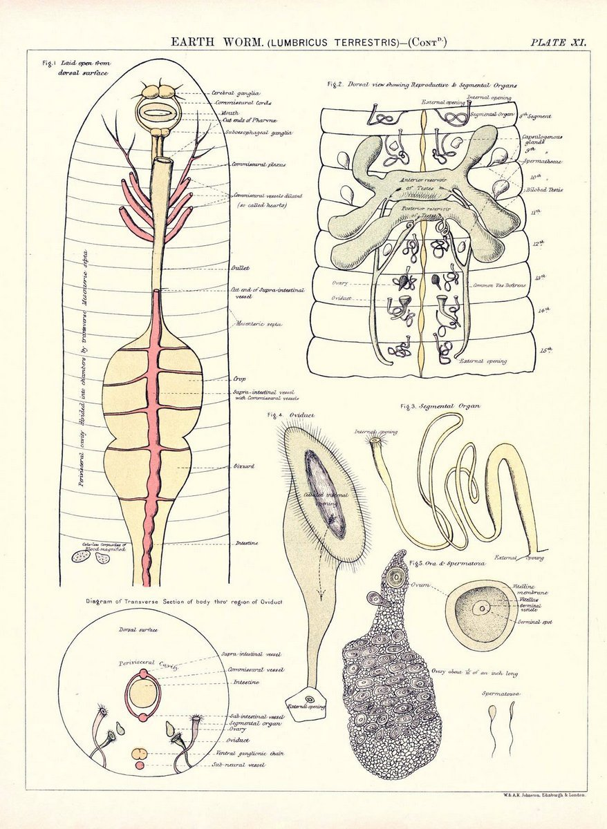 Amazon.com: Biological atlas: a guide to the practical study of ...