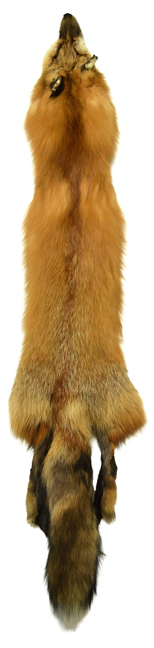 AuSable Brand Wild Red Fox Tanned Fur Pelt with Tail 44''