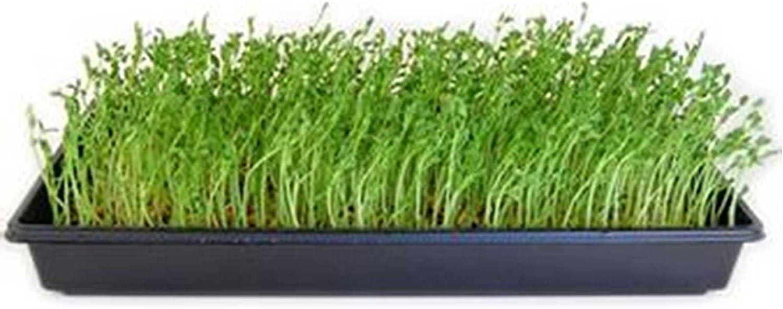 Amazon.com: Dun Pea sprouting semillas – Dried Dun Peas ...