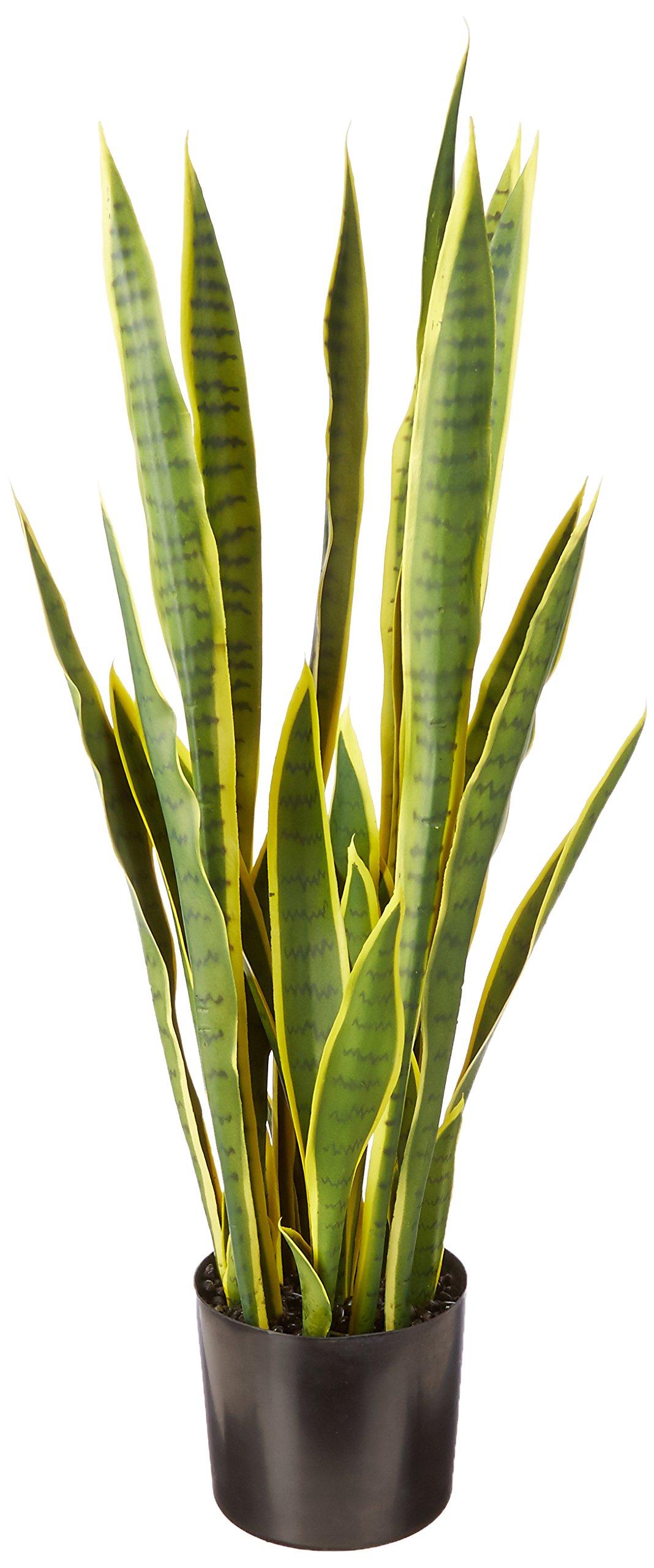 Laura Ashley VHX121203 Snake Plant Planter, 45'' by Laura Ashley