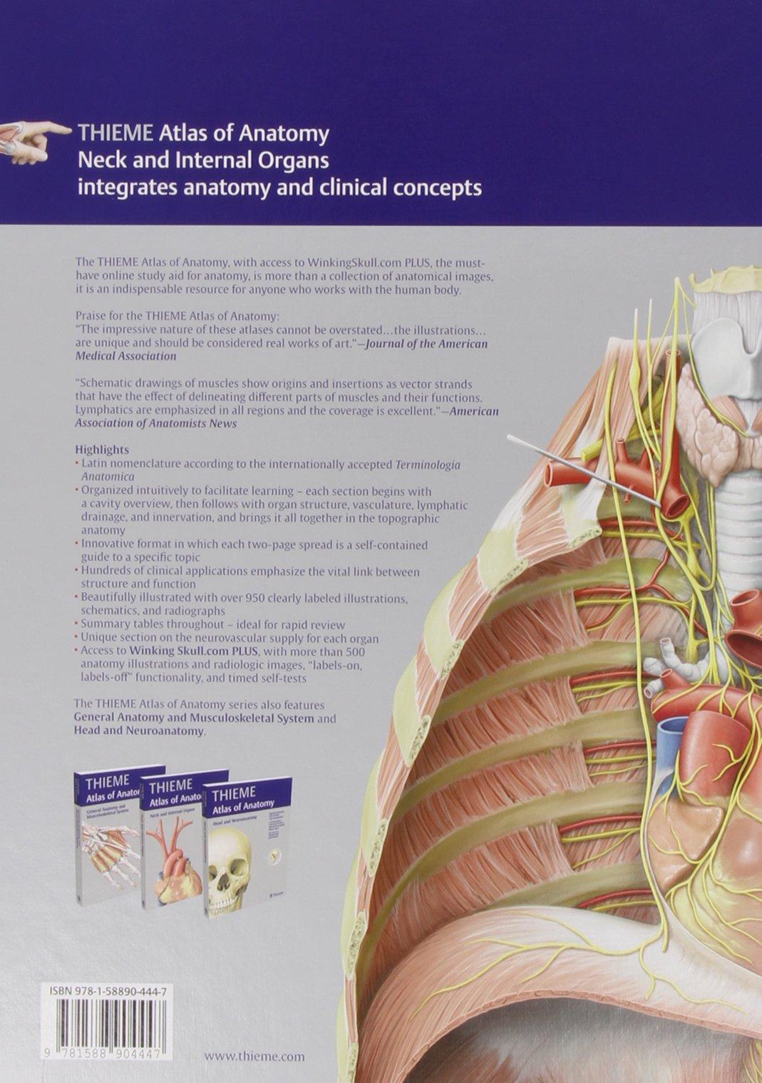 Neck and Internal Organs - Latin Nomencl. (THIEME Atlas of Anatomy ...