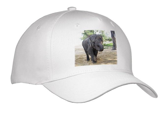 87d61584428 3dRose Angelique Cajams Safari Elephants - Thailand Elephant - Caps - Adult Baseball  Cap (cap 26798 1