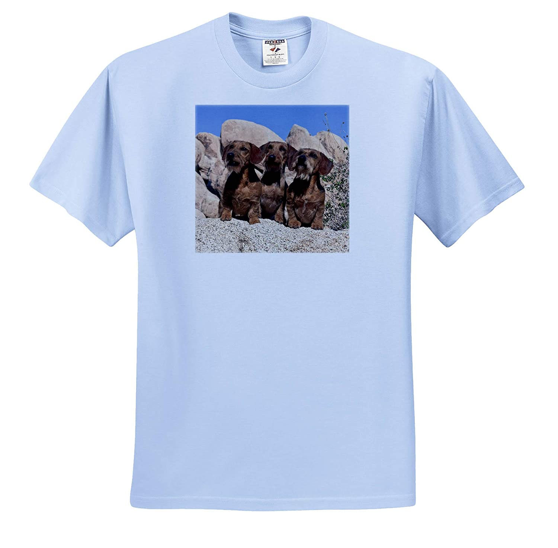 Dogs 3dRose Danita Delimont Adult T-Shirt XL ts/_314730 Dachshunds on boulders
