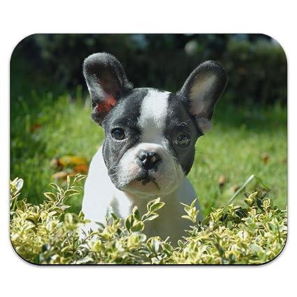 Amazoncom Black And White French Bulldog Puppy Frenchie Dog Pet