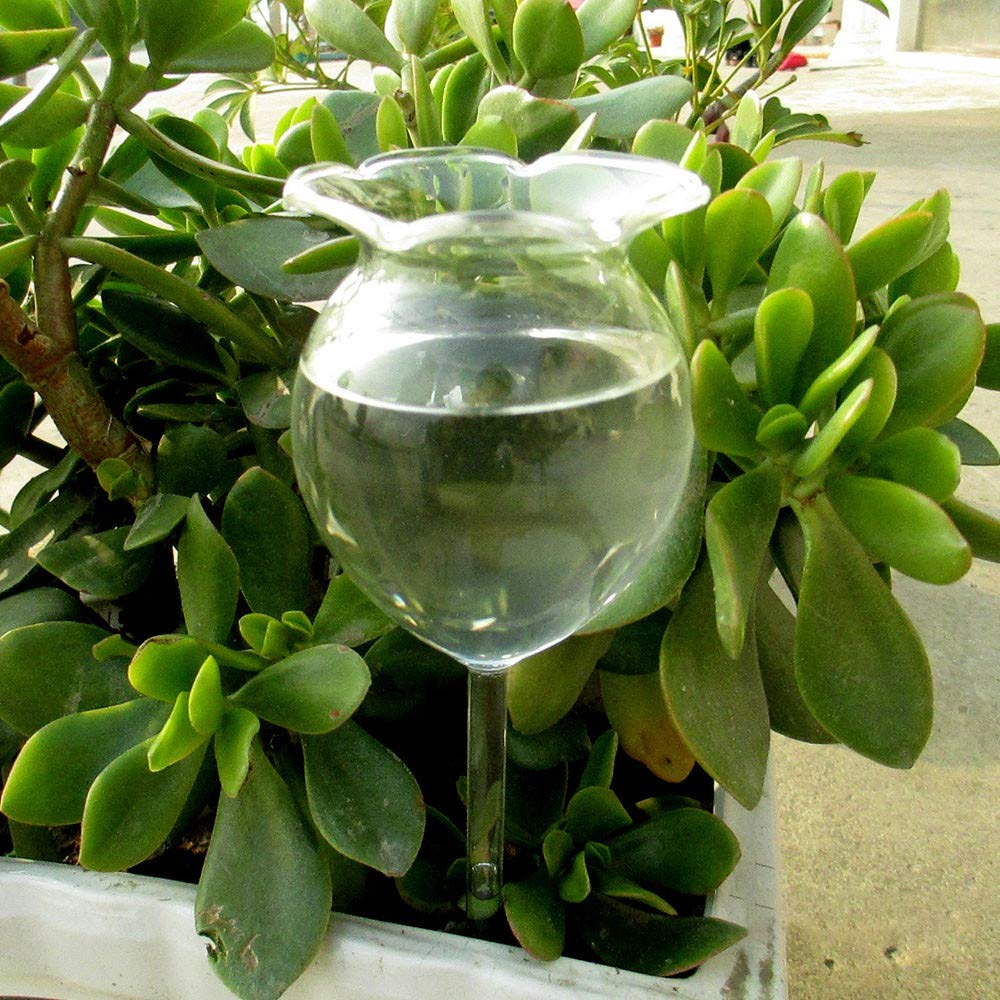 CapsA Waterer self Watering Glass Indoor Flower Plant Watering Device (A)