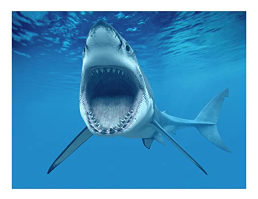 Hoja de 1/4 ~ Shark Attacking cumpleaños ~ comestible para ...