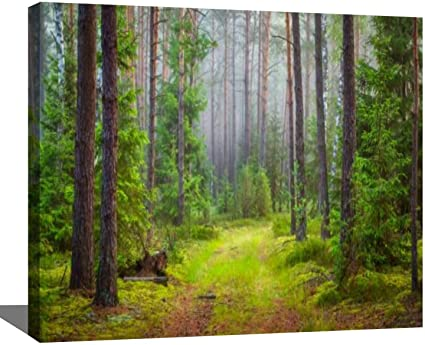 Emerald Forest scenery painting landscape forest oil 16x20 framed canvas board.