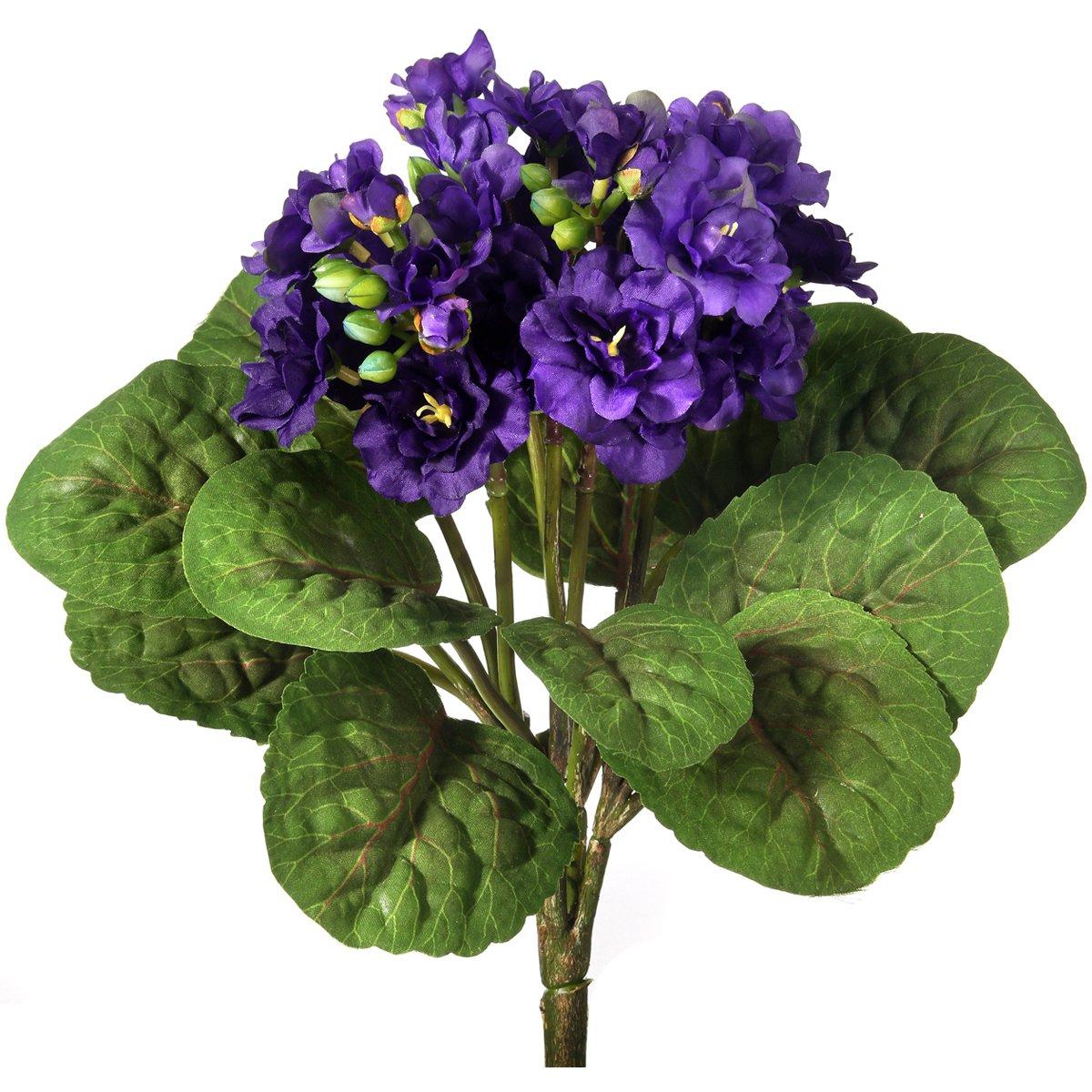 バイオレット植物12