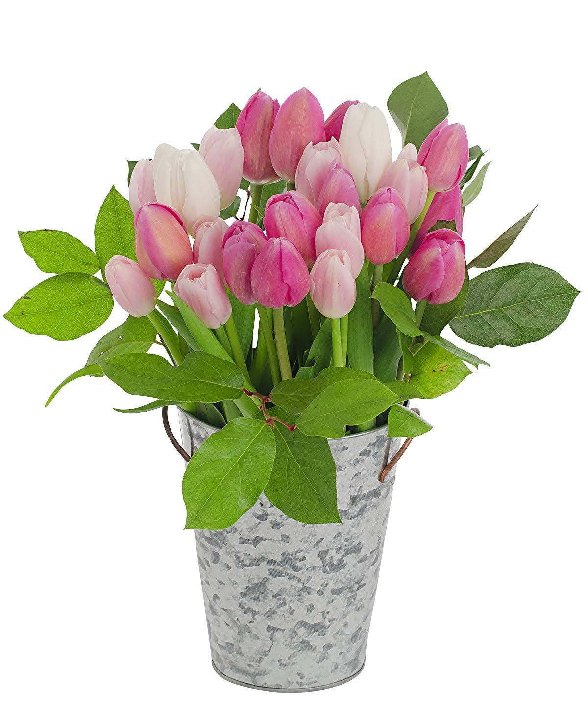 Stargazer Barm - Smitten Bouquet - 2 Dozen Assorted Pink & White Tulips With Metal Vase - Farm Fresh