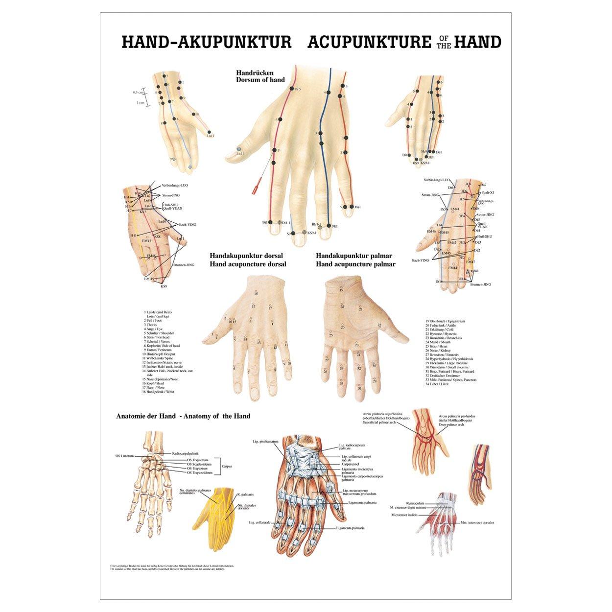 Hand-Akupunktur Mini-Poster Anatomie 34x24 cm medizinische ...