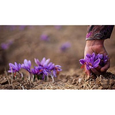 5 Saffron Plant Bulbs - Crocus Sativus - The World's Most Expensive Spice : Garden & Outdoor