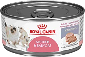 Royal Canin Mother & Babycat Ultra-Soft Mousse in Sauce Wet Cat Food, 5.8 oz., Case of 24, 24 X 5.8 OZ