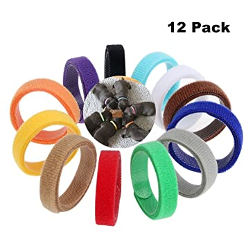 GLEADING 12 Collares Ajustables para Cachorros/Gatitos. Collares Identificadores de Colores: Amazon.es: Productos para mascotas