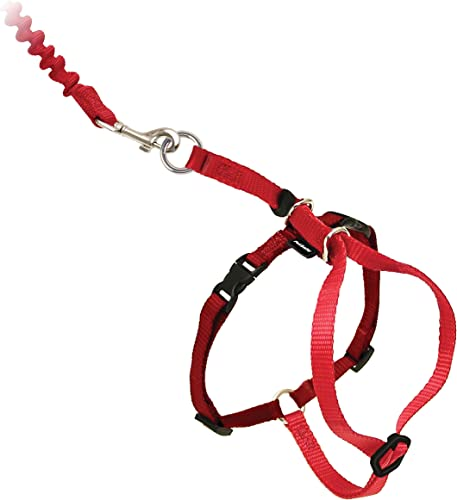 PetSafe-Come-With-Me-Kitty-Harness-and-Bungee-Leash
