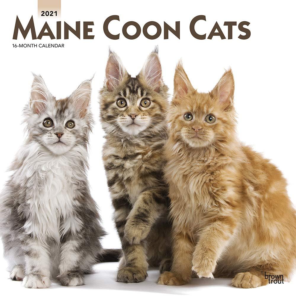 Amazon Maine Coon Cats 2021 Calendar Browntrout Publishing ȼ¸å…¥ç‰ˆã'«ãƒ¬ãƒ³ãƒ€ãƒ¼