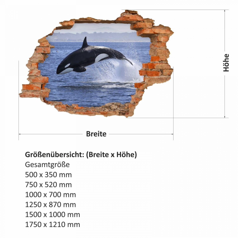 Charmant Anatomie Der Blauwal Ideen - Anatomie Und Physiologie ...
