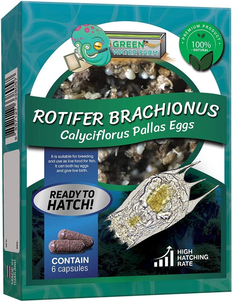 Greenwaterfarm Rotifers Brachionus calyciflorus Pallas Eggs Live Fish Food for Hatching and Culture Suitable for Feed Betta Fish