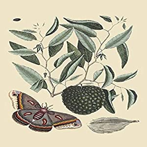 Buyenlarge 0-587-30513-4-P2030 'Sugar Apple and Carolina Moth' Paper Poster, 20 by 30-Inch
