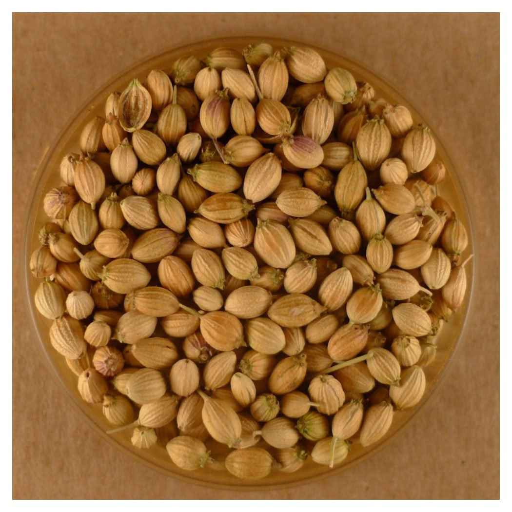 Coriander Seeds, Whole - 25 lbs Bulk by Spices For Less (Image #1)