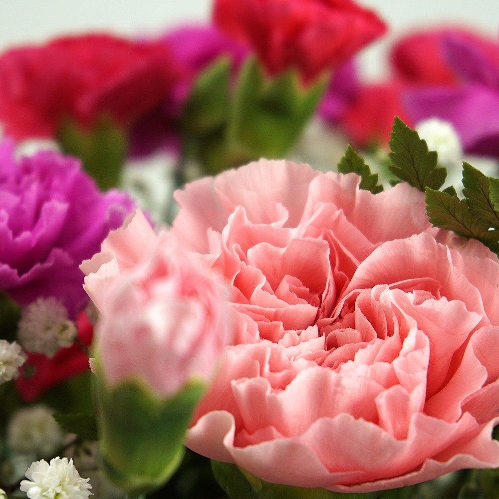 Pink Carnation Fresh Flower Bouquet Delivered In 1hr Timeslot