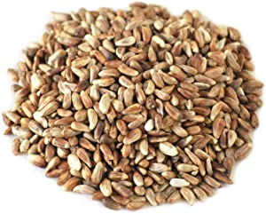 Des Moines Feed Co. 20-Pound Bag Nutra-Saff Safflower Seed Wild Bird Food Seed