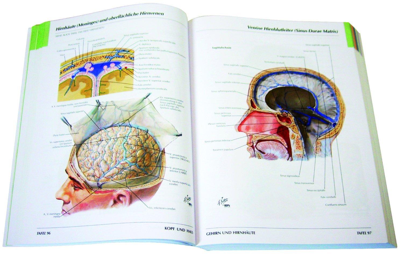 Ziemlich Gehirn Anatomie Malbuch Zeitgenössisch - Malvorlagen Ideen ...