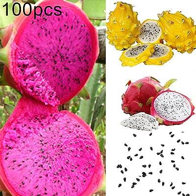 angel3292 100Pcs Pitaya Seeds, Fruit Seeds Mixed Color Pitaya Seeds Delicious Fruit Bonsai Plant Home Garden Decor Pitaya Seeds : Garden & Outdoor