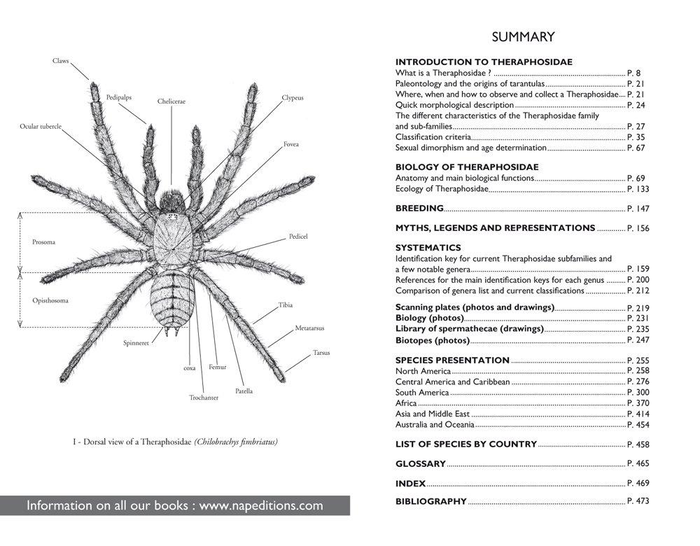 Tarantulas Of The World Theraphosidae Amazon Franois