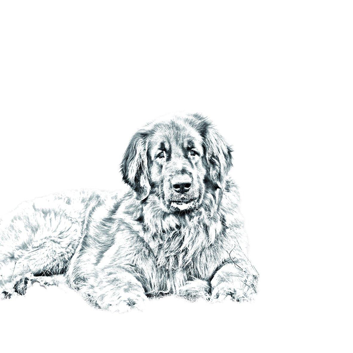 Unique Gift New keyrings with Purebred Dogs Art Dog Ltd Leonberger Sublimation