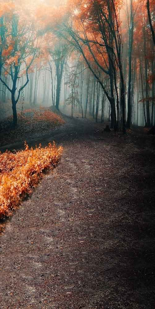GladsBuy Woods Road 10' x 20' Digital Printed Photography Backdrop Halloween Theme Background YHA-420
