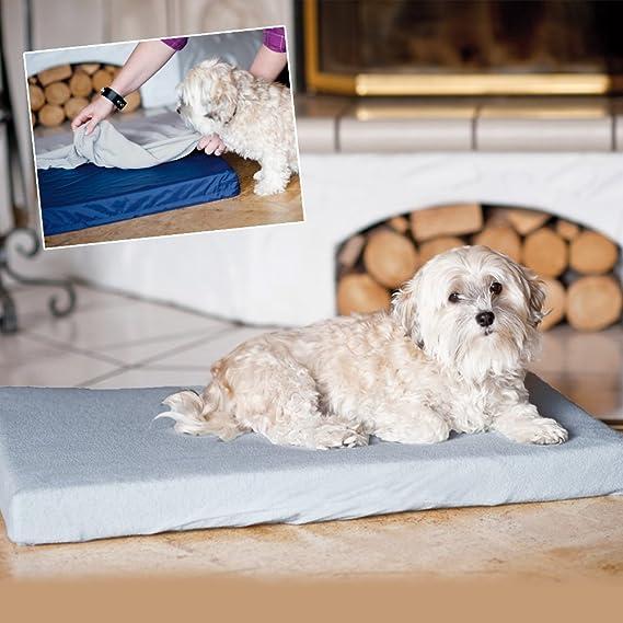 Dog Ortho Clinic incontinencia el ortopédico profesional cama para perros para higiene óptima con superficie abwaschbarer y extra Funda: Amazon.es: ...
