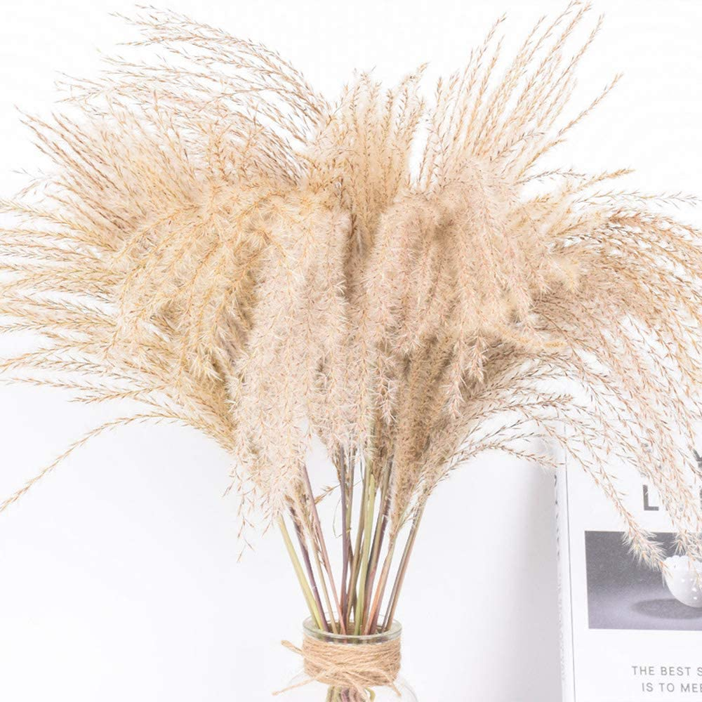 Hzl Natural 100 50pcs Dried Reed Bundle Bouquet Flower Dried Flower Pampas Grass Phragmiteswedding Holiday Party Decor 100 Pcs Amazon Co Uk Kitchen Home
