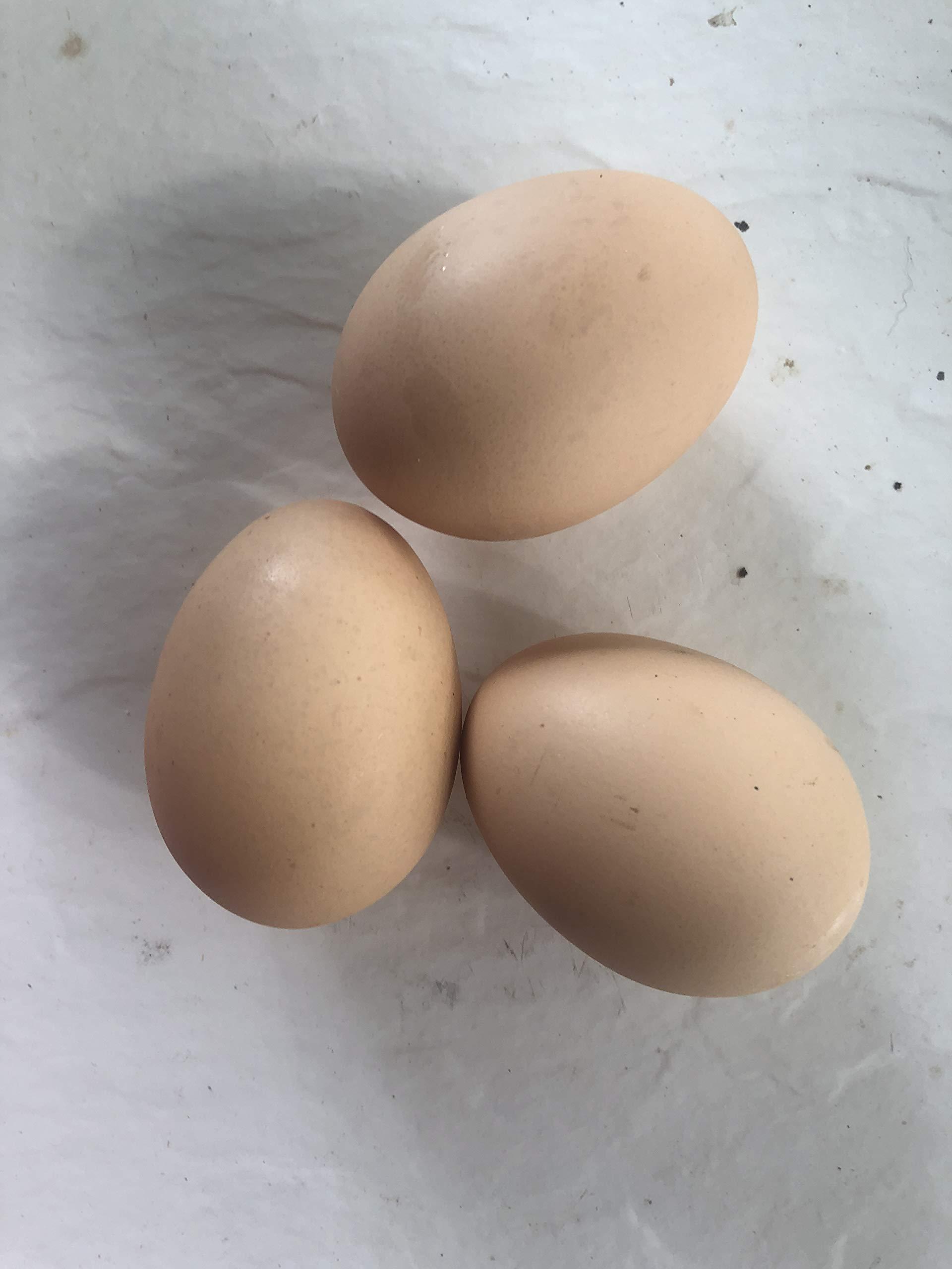 Silver Laced Wyandotte Hatching Eggs (dozen)