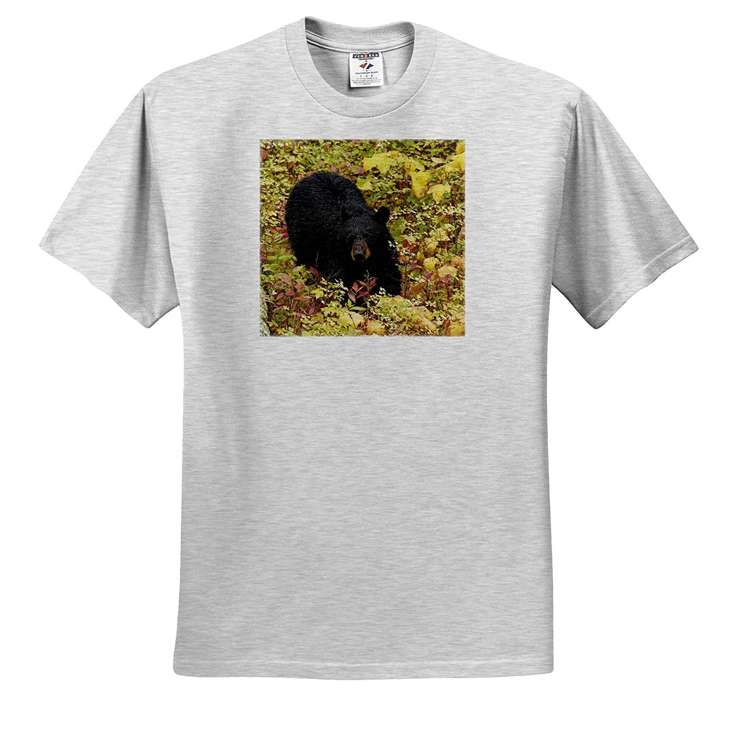 ts/_314892 Bears Yellowstone National Park - Adult T-Shirt XL Black Bear in Autumn Foliage 3dRose Danita Delimont