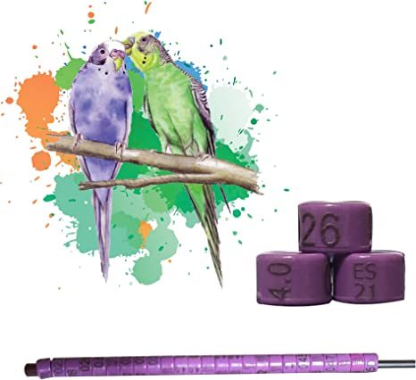 nestQ Anillas Periquitos 2021 Color Violeta Federativo Policromo Grabado Laser Cerradas 4.0 Milimetros Numeradas con A/ño Marcado 1 Tira con 25 Anillas
