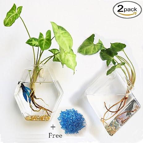 Amazon Kathson 2 Pack Wall Hanging Plant Terrarium Glass