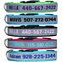 LovelyDog Embroidered Personalized Dog ID Collar