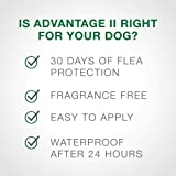 Flea and Lice Treatment for Dogs, 21 - 55 lb, 4