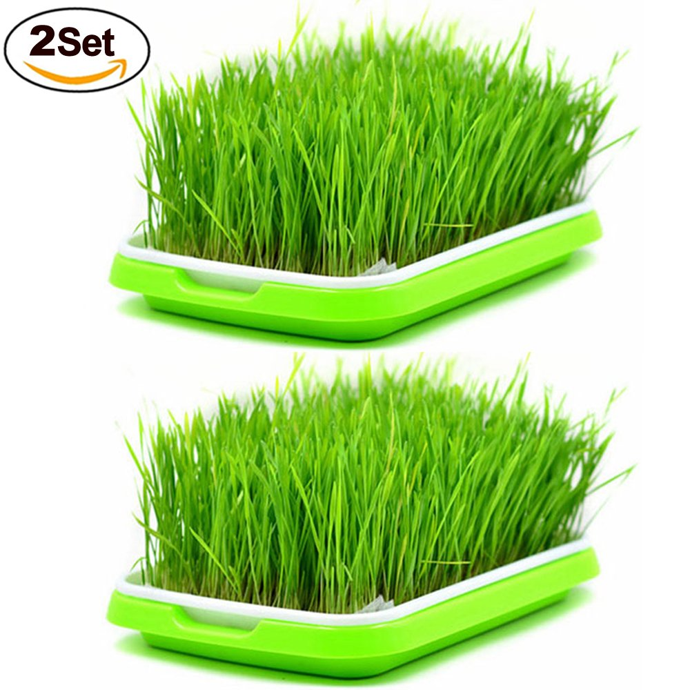 Seed Sprouter Trays,2 Set Soil-Free Densely Small Hole Healthy Wheatgrass Grower 9.84x13.4x1.77inch by LeJoy Garden (Image #1)