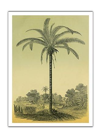 Amazon ヤシの木 フランスの雑誌lイラスト園芸の園芸イラスト