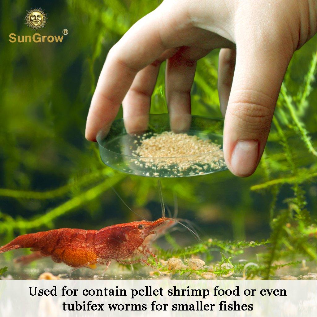 Tough Borosilicate Glass Shrimp - Fuente de alimentación para camarones - Evita derrames de alimentos y contaminación del acuario - Resistente lavabo ...