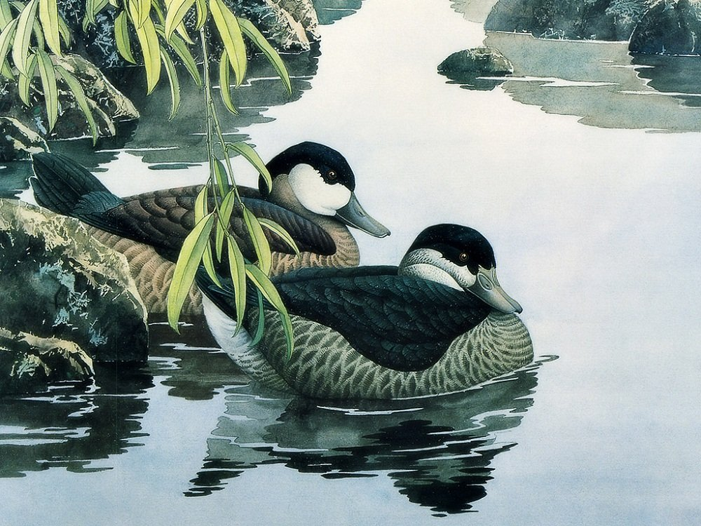 Colour Talk Diy oil painting, paint by number kit- Two Ducks 1620 inch.
