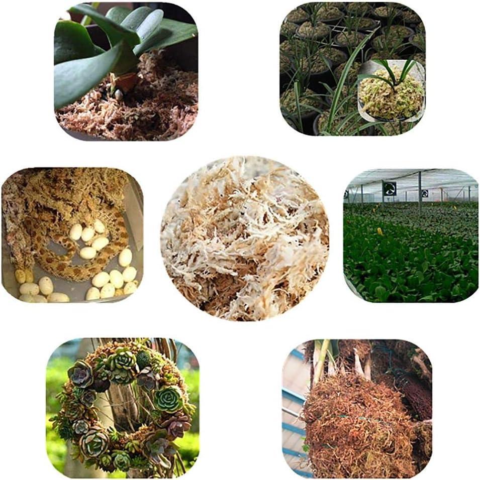 Wasser Moos Trockenmoos Phalaenopsis Orchideen Soilless rosemaryrose Sphagnum Moos Orchideen Sphagnum Getrocknete Kultivierungssubstrat Boden 12L Compressed Pack
