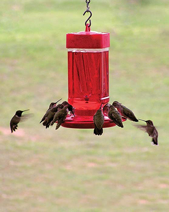 First-Nature-3055-Hummingbird-Feeder