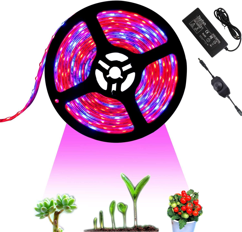 Tesfish 12V Lámpara de Plantas 5M con adaptador de corriente y atenuador, Luz de Plantas Lámpara Impermeable Espectro completo Rojo Azul 4: 1 para Plantas de interior invernadero, planta de acuario