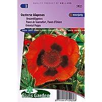 Semillas de amapola oriental de flores escarlatas