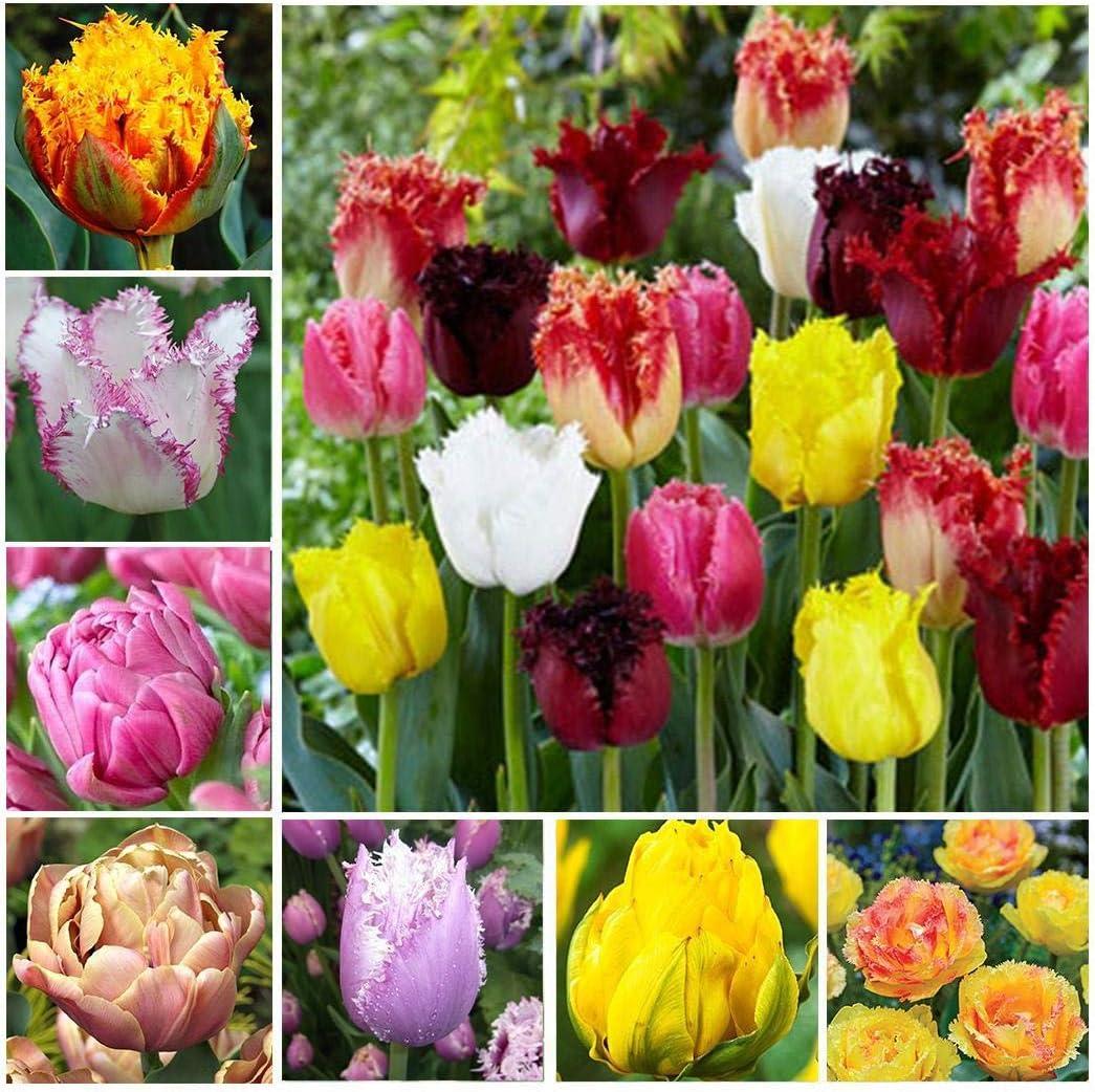 Amazon Com Baorin New Nice Adorable Flower Fragrant Seeds